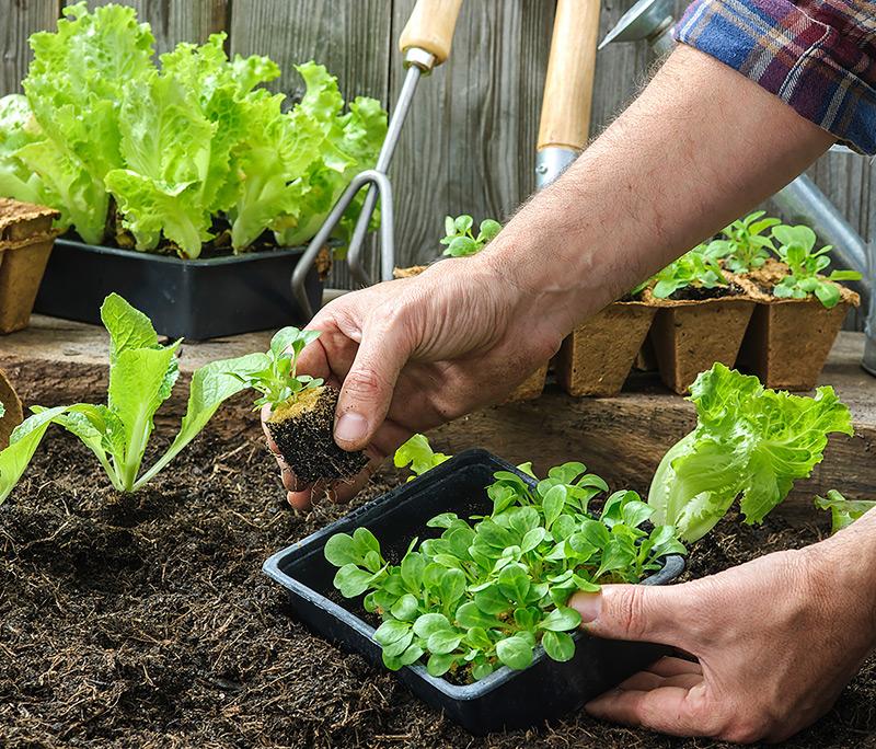 Groente verbouwen in je eigen moestuin